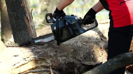 Распиливание дерева бензопилой.