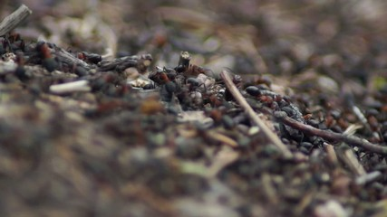 thousands of ants swarming in the forest