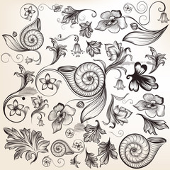 Collection of vector calligraphic elements and flourishes