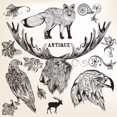 Collection of vector hand drawn animals and flourishes