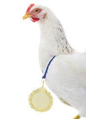 Chicken with golden medal