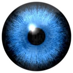 Illustration of blue eye iris, light reflection. Five sizes.