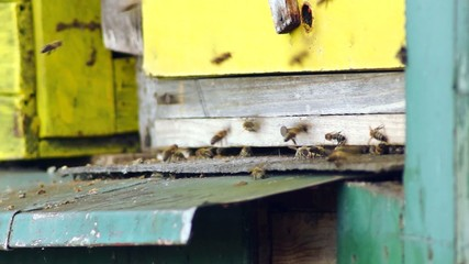 fly forest bees into the hive