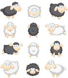 Schafe großes Set