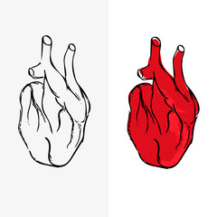 Set of two hearts, heart illustration, medical vector eps10