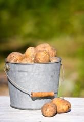 bucket of potatoes on  green background