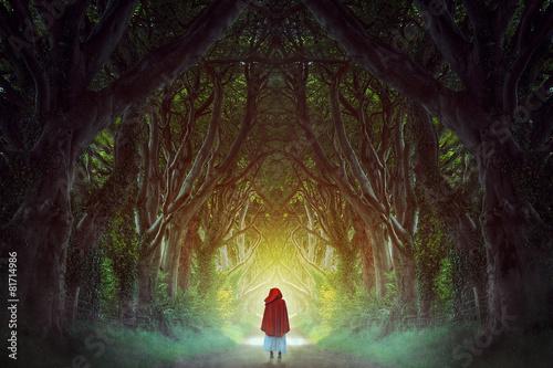 Dark forest road - 81714986