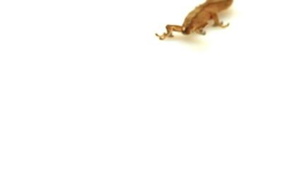 gecko on white