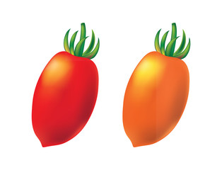 Two cherry tomato on white background, vector.