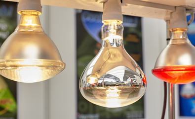 lamps for poultry