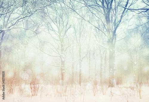 Winter  wonderland forest background.