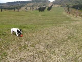 犬とボール投げ