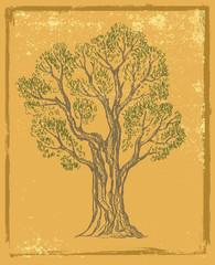 vector hand drawn Tree