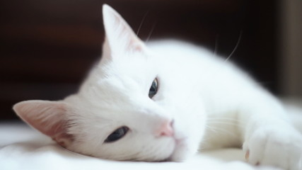 Cute white cat relaxes on bed.