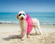 Hund mit Schwimmreifen am Strand - 81723540