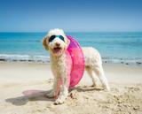 Hund mit Schwimmreifen am Strand
