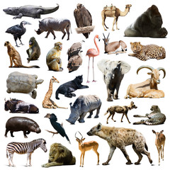 hyena,  gorilla and other African animals