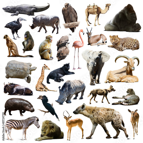 Foto op Canvas Aap hyena, gorilla and other African animals