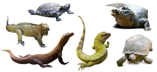 Set of reptilian