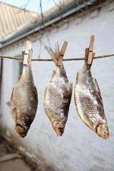 сухая рыба висящая на веревке