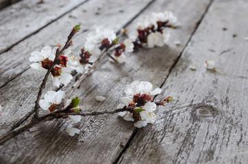 Spring Blossom over wood background