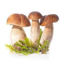 Three Boletus Edulis mushroom and moss over white background