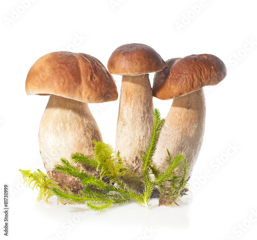 Three Boletus Edulis mushroom and moss over white background - 81730999