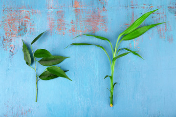 Bamboo and pipal twigs on wooden background