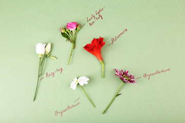 Beautiful flowers with inscriptions on paper background