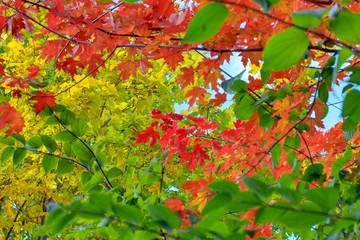 HerbstlicheStimmungBlaetter