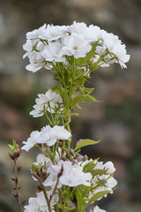 white flowers on tree