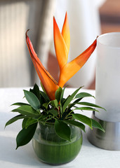 bouquet heliconia