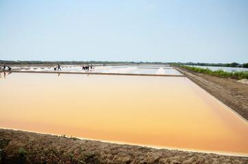 Salt farming or Salt evaporation pond