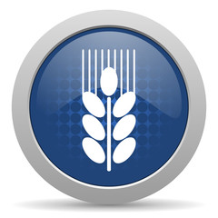 grain blue glossy web icon