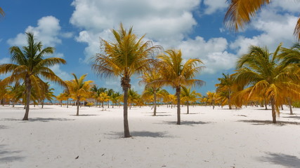 Time Lapse Palm trees at the Sirena beach