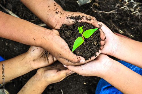 child holding young plant in hands . Ecology concept - 81742985