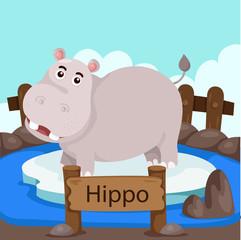Illustrator of Hippo in the zoo