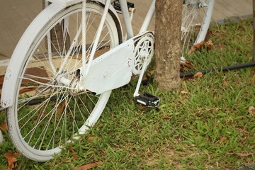 Old wheel bicycle on a green background.