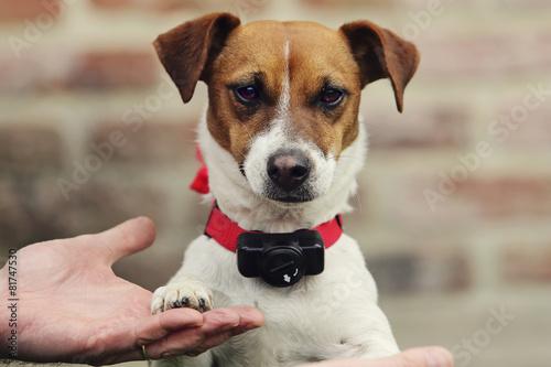 Papiers peints Chien chien avec collier anti-fugue