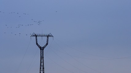 Flock of birds fly on background of transmission tower and sky