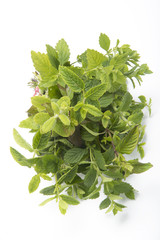 Mint mixi solated on white background