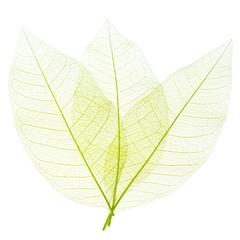 feuilles décoratives sur fond blanc