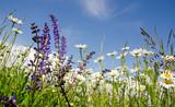 Entspannung: Blumenwiese in der Pfalz :)
