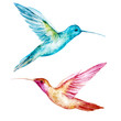 Watercolor colibri bird - 81755539