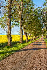 Country road alley