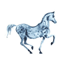 Watercolor grey horse on white. Vector.