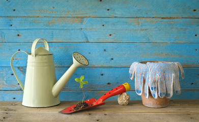 Young seedling and gardening utensils, free copy space