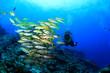 Scuba diver and fish - 81763742