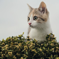 chaton dans pot de buis
