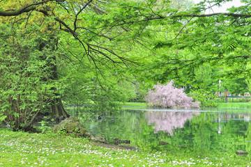 Milano Parco Sempione a primavera